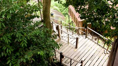 Treetop Chalet Japamala Chalet